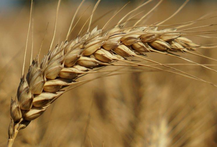 celiac vs wheat vs gluten sensitivity